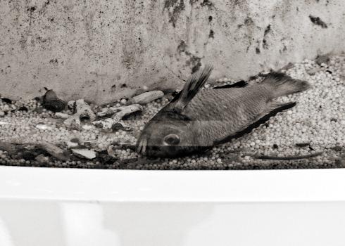 Dead-fish-lafayette
