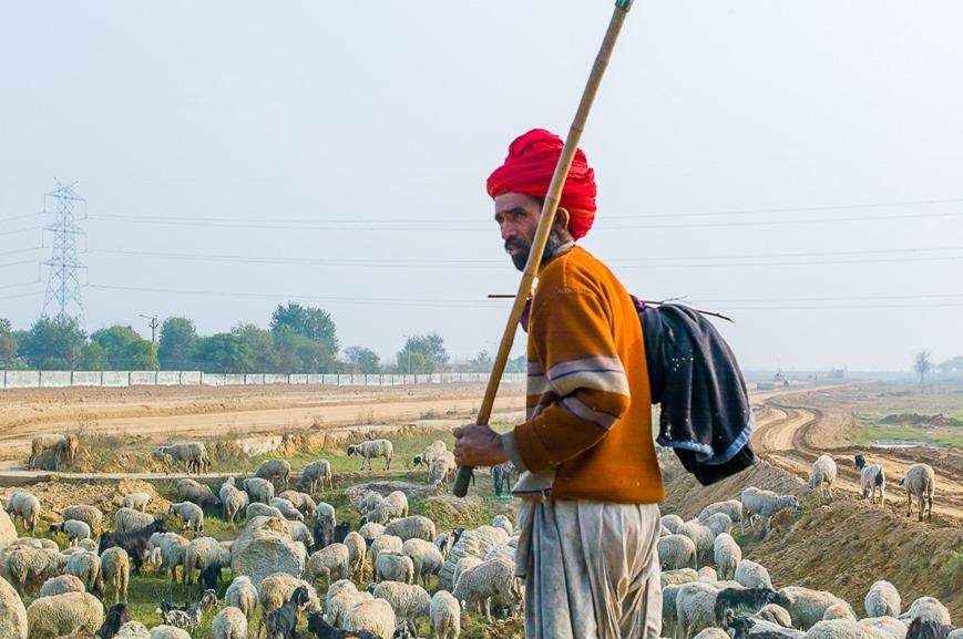 The Lone Shepherd