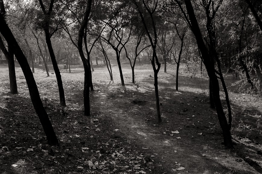 Woods of Agra
