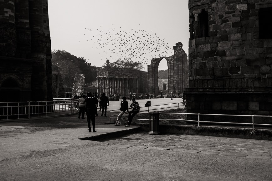 Pigeons in Delhi